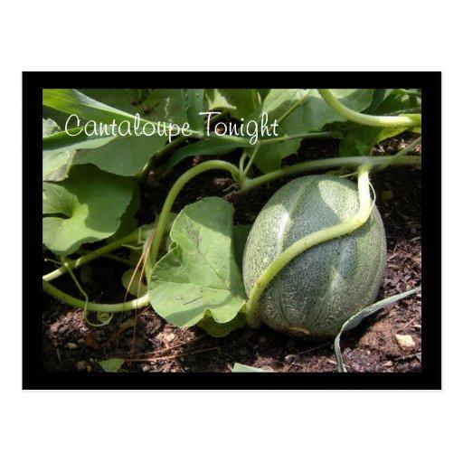 Cantaloupe on the Vine Postcard