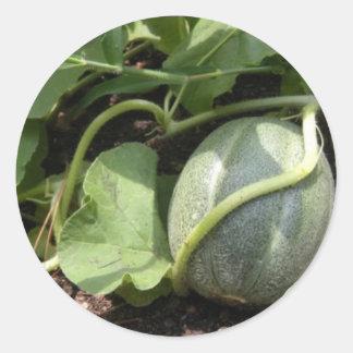 Cantalupo en la vid pegatina redonda