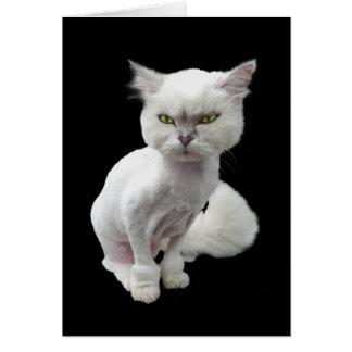 Cantankerous, cute crazy cat 2 greeting card