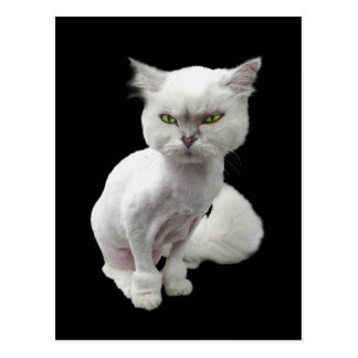 Cantankerous, cute crazy cat 2 postcard