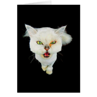 Cantankerous, cute crazy cat greeting cards