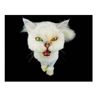 Cantankerous, cute crazy cat postcard
