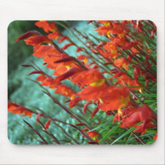 Canted Gladiola Flowers Mouse Pad