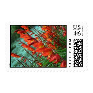 Canted Gladioli stamp
