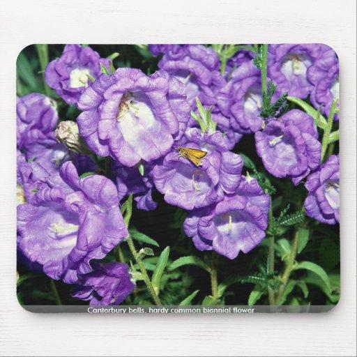 Canterbury bells, hardy common biennial flower mousepad