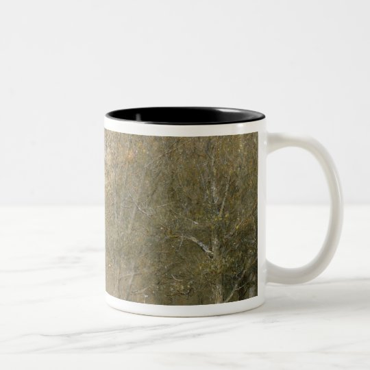 Canterbury Cathedral Two-Tone Coffee Mug