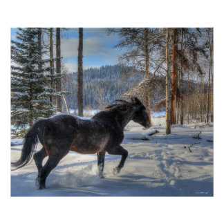 Cantering Black Percheron Horse & Snow Photo 2 Poster