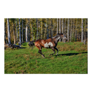 Cantering Paint Stallion & Forest Equine Photo Poster