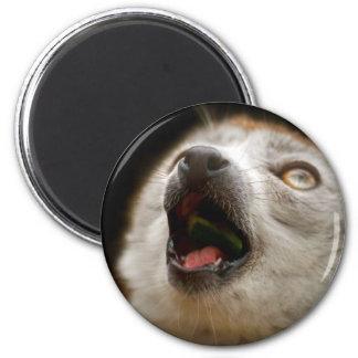 Canto coronado del Lemur Imán Para Frigorífico