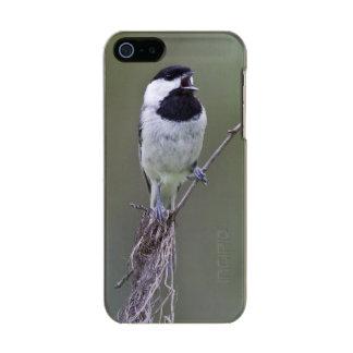 Canto del chickadee de Carolina Carcasa De Iphone 5 Incipio Feather Shine