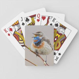 Canto del pechiazul barajas de cartas