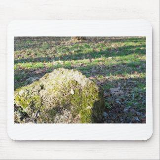 Canto rodado cubierto de musgo de piedra grande en tapetes de raton