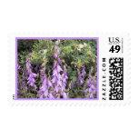 Cantorbery Belces púrpura 1 sello