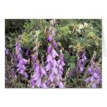 Cantorbery Belces púrpura 1 tarjeta de felicitació
