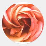 Cantorbery color de rosa 3 los regalos de Zazzle d Etiqueta Redonda