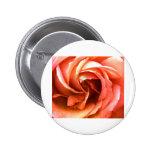 Cantorbery color de rosa 3 los regalos de Zazzle d Pins