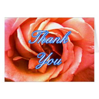 Cantorbery color de rosa 3 los regalos TYC de Zazz Felicitaciones