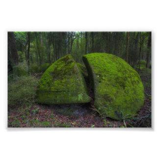Cantos rodados de Whitecliff - escena del bosque Cojinete