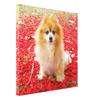 Canvas 12x12 Pomeranian Marley with Red Flowers