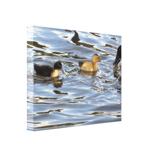 Canvas: Duckling Canvas Print