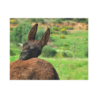 Canvas: Happy Donkey Canvas Print