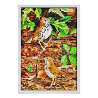 Canvas look drawing: wood thrush and hermit thrush poster