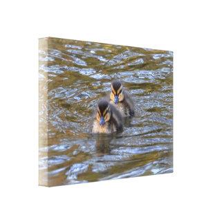 Canvas: Mallard Ducklings Canvas Print