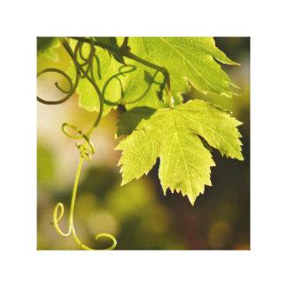 Canvas: Mediterranean Grape Vine Canvas Print