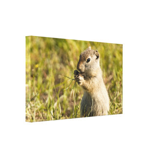 Canvas of cute ground squirrel eating canvas prints