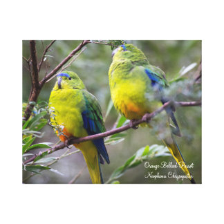 Canvas 'Orange Bellied Parrot'