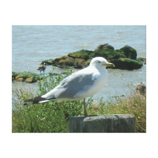 Canvas Print - Gull on Piling
