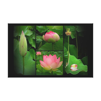 Canvas Print - Life of a Lotus Flower