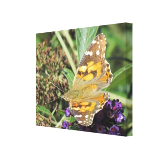 Canvas Print - Orange Butterfly