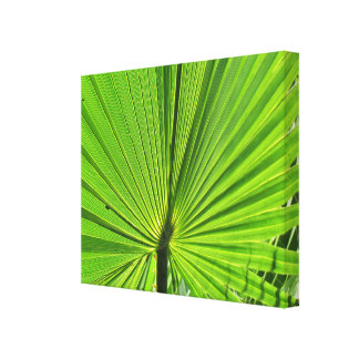 Canvas Print - Palm Frond