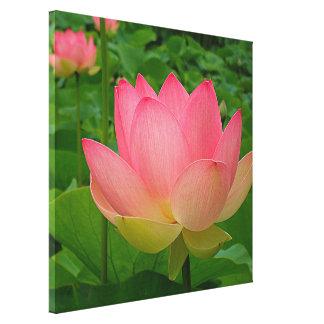 Canvas Print - Sacred Lotus