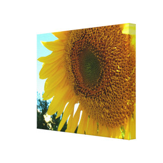 Canvas print - Sunflower and bee