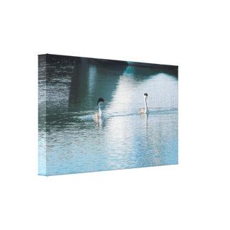 Canvas Print - Western Grebe in Harbor