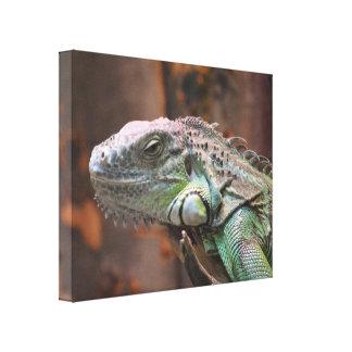 Canvas Print with colourful Iguana lizard