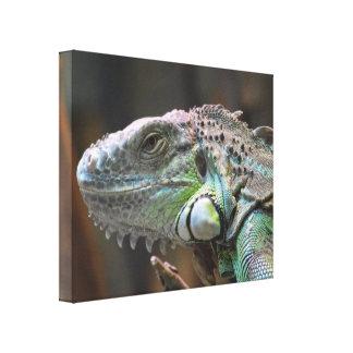 Canvas Print with head of colourful Iguana lizard