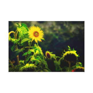 Canvas print, wrapped - Sunflowers