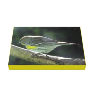 Canvas print - Yellow Breasted Bird on Branch