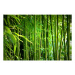 Canvas printing canvas Canvas print   bamboo