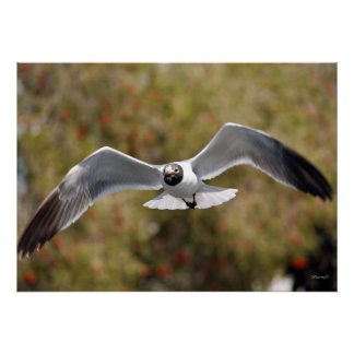 Canvas Seagull print