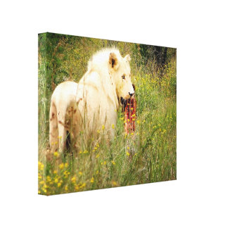 Canvas White Lion from Africa