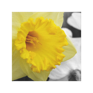 canvas with yellow narcissus canvas print