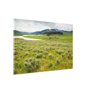 Canvas Wrap: Lamar Valley #2