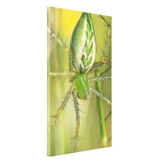 Canvas Wrap: Lynx Spider 3
