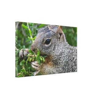 Canvas Wrap: Munchy Squirrel