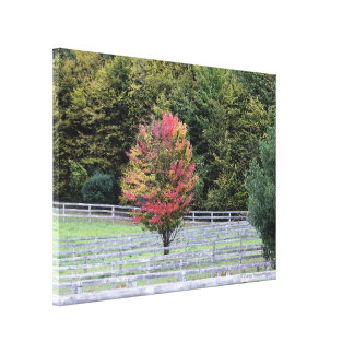 CANVAS WRAP PRINT/MULTI-COLORED TREE IN FIELD