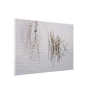 Canvas Wrap: Reed Reflections